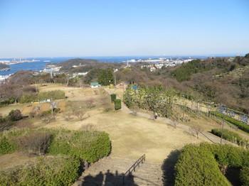 田浦梅林・横須賀まで歩き・ポートマーケット・ジュエリ 002.JPG
